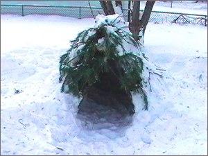 Tree shelter